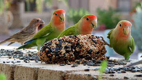 madár, mag, magkeverék