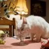 Hogyan készítsünk cicánknak egészséges házikosztot? Receptekkel!