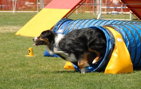 kutya, agility, pálya