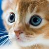 Hihetetlen: megtaláltuk a legviccesebb macskás videót!