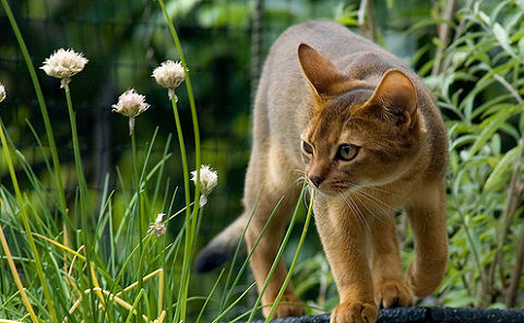 macska, kert, veszélyes