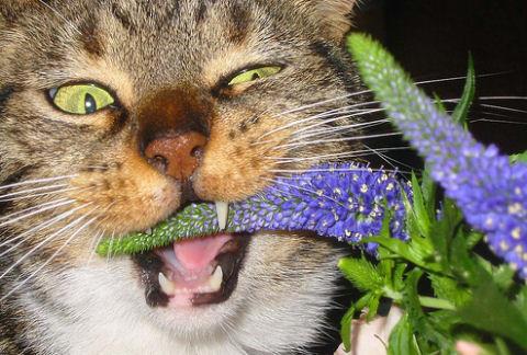A mérgező szobanövénytől tartsd távol állatod!