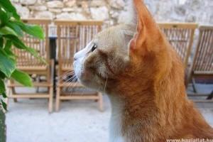 Milyen a macskád?