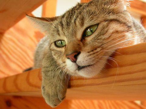 Mikor beteg a macska?