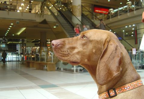 Kutyabarát hétvége a Mammutban! - 2009. május 22-24.