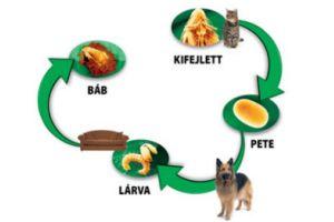Hogyan védjük meg kutyánkat a külső élősködőktől?