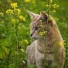 Miért legelnek a macskák füvet?
