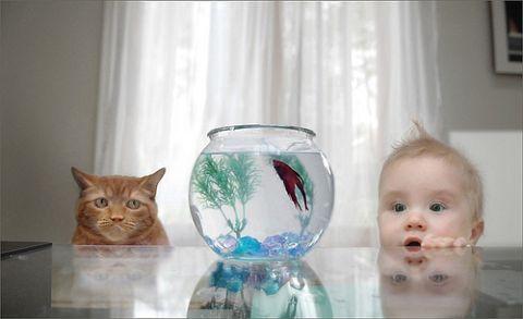 macska-es-bebi