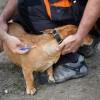 A kutyák veszettség elleni kötelező védőoltásáról