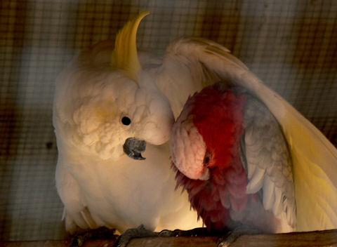 madár, pár, madárfióka