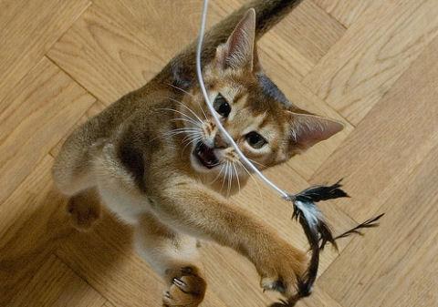 Miért jó macskának lenni?