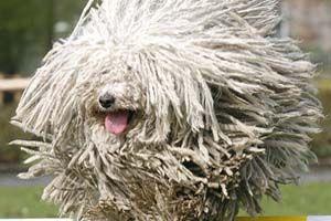 Ne kezeld felmosórongyként kutyádat!