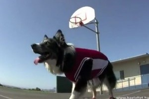 Petey, a kosarazó kutya!