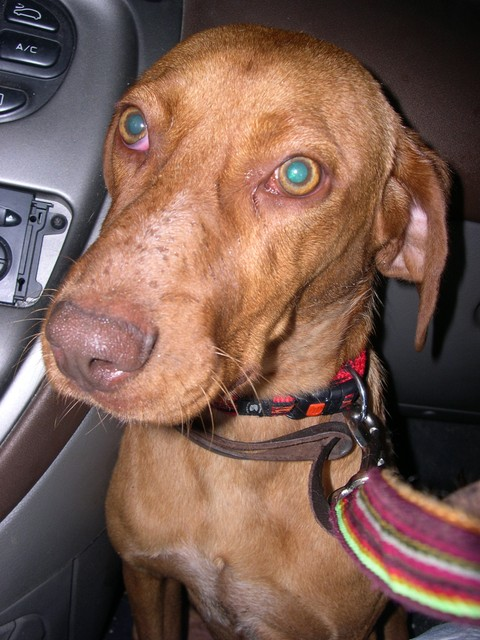 Örökbefogadható kutyusok a Futrinka Egyesületnél