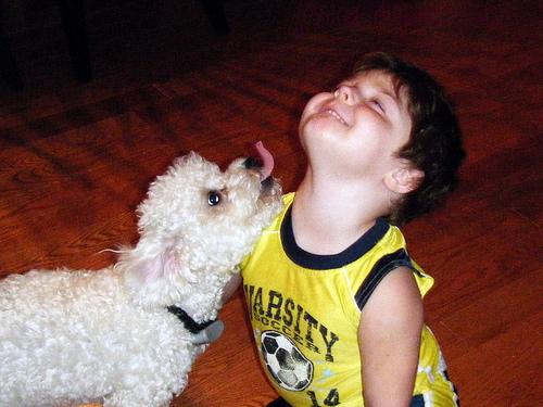 A kutyánk szemével a világ és mi...