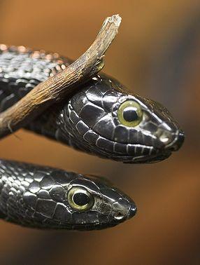 hüllő, kígyó, veszélyes