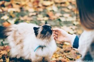 Milyen ételt NE adj cicádnak?