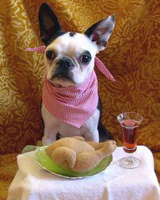 kutya, etetés