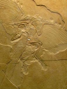 Archaeopteryx-lelet