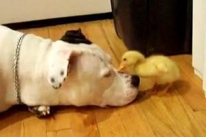 Nem minden kutya vadászik kacsára!