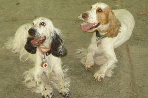 Terápiás kutyák: nem csak gazdájuk életét teszik szebbé!