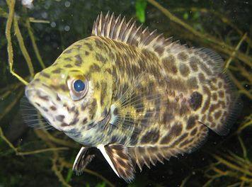 18 érdekesség halakról
