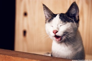 Kiköpte már a macska a szőrlabdát?