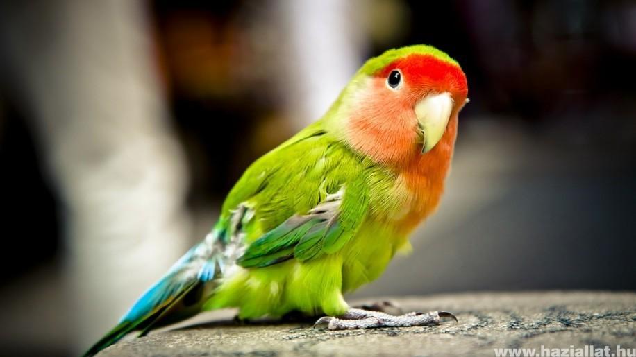 Tollas barátaink - fontos tanácsok madártartóknak
