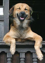 kutya, mosoly