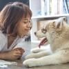 Kutyafajták és gazdáik: amilyen a kutya, olyan a gazdája?