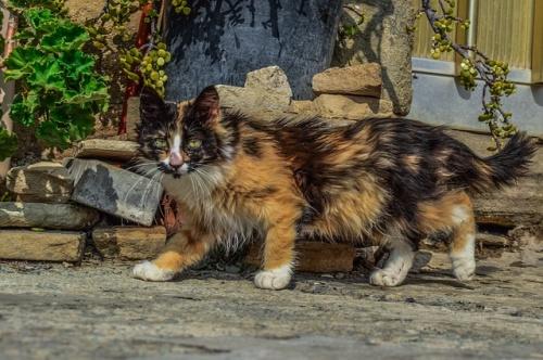 cat-3427658_640
