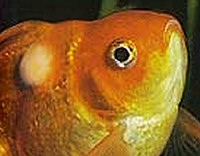 Gyakori halbetegségek