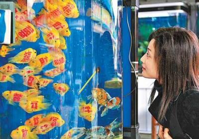 Tetovált halak a piacon: tűvel, pisztollyal