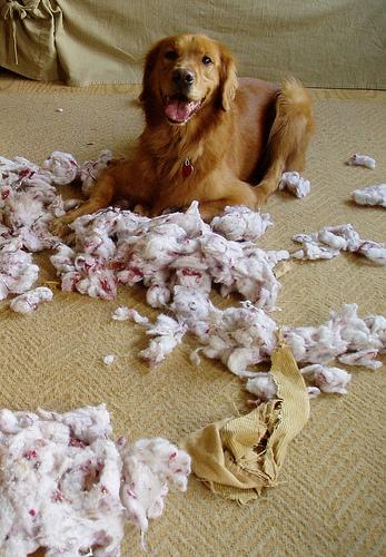Kutya és boldogság: mitől boldog egy kutya?