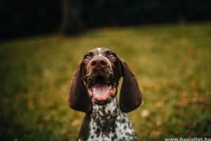 Milyen a boldog egy kutya, és milyen a boldogtalan eb?