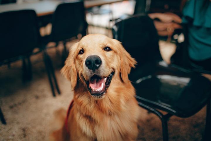 kutya boldogság, boldogtalanság, jelek, tünetek