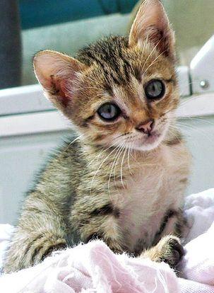 Milyen macska kell nekünk?