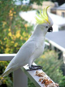 Elsősegély madaraknak