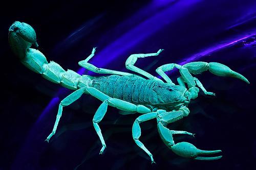 Skorpiók kezdőknek és haladóknak