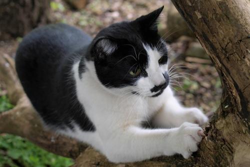cat-2576794_1280