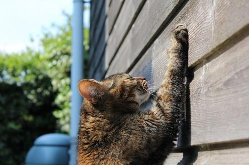 cat-750259_1280