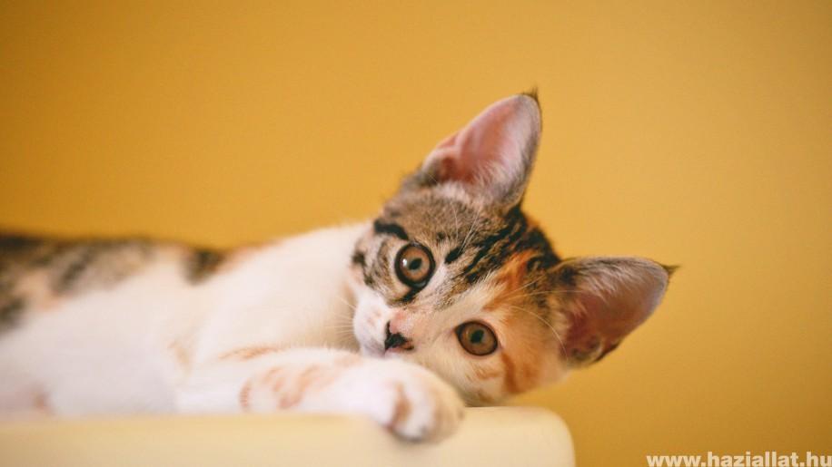 Macskakaparás ellen: 3 bútormentő tipp, ami bevált