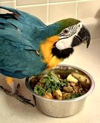 Gombóc Artúr esete nem egyedi: egy madár is lehet kövér!