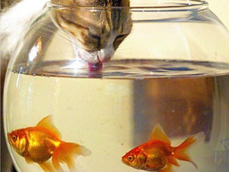 Hal ízű víz cicáknak?
