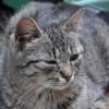 Mi az a macskanátha?