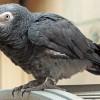 Taníts trükköket papagájodnak!