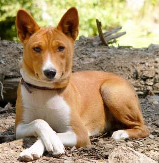15 dolog, amit még nem tudtál a kutyákról