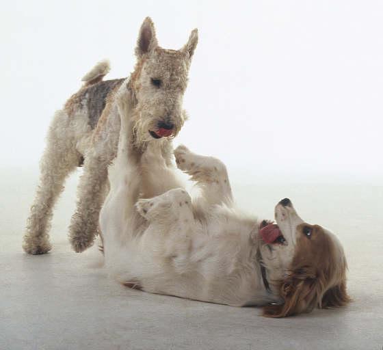 A kutyák testbeszéde