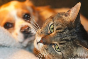 Kutya-macska kulisszatitkok
