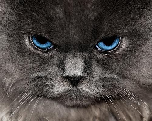 macska-portre